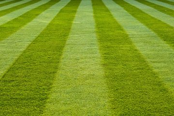 Residential and Commercial Mowing